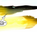 Wakandan Air Guard (Earth-616)