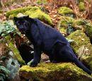 Dark Leopard