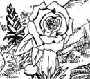 Ornery Roses