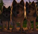 Loups (Club hippique)