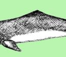 Rysunki poglądowe-Delfin Chiński