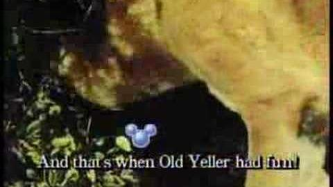 Old Yeller (song)