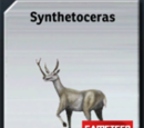 Synthetoceras