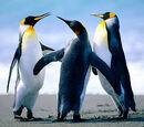 Lolpookiesx3/Penguin Backround