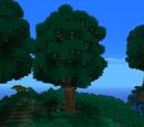 Sacred Oak