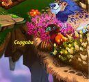 Congoba.jpg