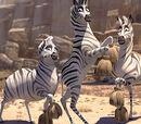 Cheerleader Zebras