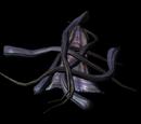 Netchleder (Dragonborn)