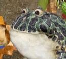 Save the Bullfrog!