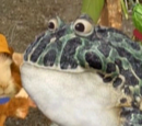Grandfather Bullfrog