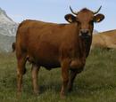 Toro/Vaca