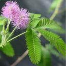 TickleMe Plant flowers.jpeg