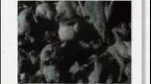 Eyewitness - Mammal pt.1-0