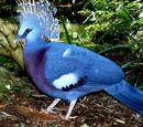Pombo-Coroado