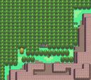 Bosques de Sinnoh