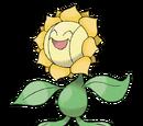 Sunflora (Mystery Dungeon)