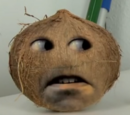 Coconut (He Will Mock You)