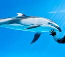 Candor/Shedd Aquarium