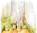 Big Fir Tree