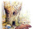 Hollow Oak Tree