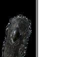 Drakekeeper's Greatshield