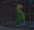 Сумасшедшая птица