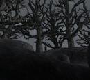 Drzewo Loki
