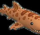 Swell Shark