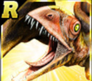 Rare Anurognathus