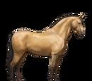 Koń luzytański