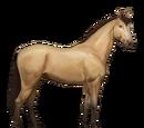 Koń Doński