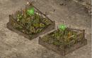 Vegetable Garden Level 3 Full.PNG