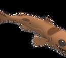 Dwarf Lantern Shark