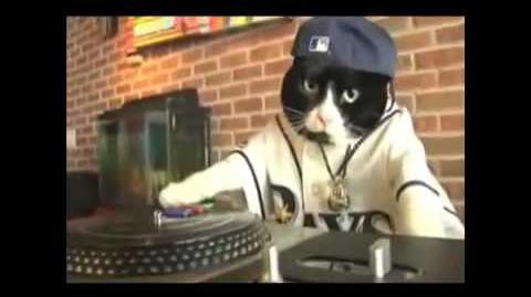DJ gato-el gato rapero de 50 Cent