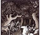 Khu rừng của Orome