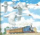 Thomas and the Swans