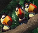 Tucanos Filhotes