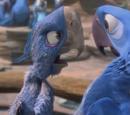 Престарелый ара
