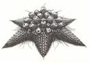 Concept Art - Rebirth of Mothra 2 - Barem 1.png