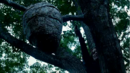 640px-Katniss tracker jackers.png