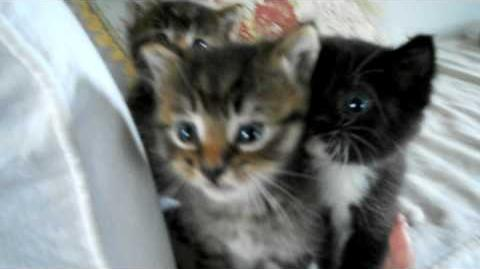 Our new baby kittens