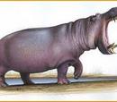 Hippopotamus creutzburgi