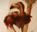 Zeropteryx torova