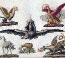 Zoología y Cuidado de la Fauna Mágica