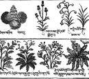Botánica y Cuidado de la Flora Mágica