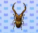 Lucane cyclommatus