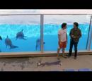 Morte tra i delfini