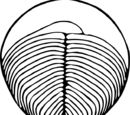 Вендиаморфы