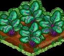 Violet Vein Spinach