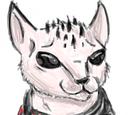 Zin Cat